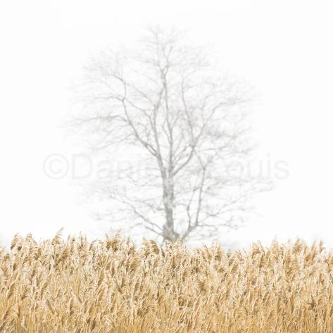 Winter tree.