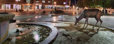 City Hall at night in Moncton NB
