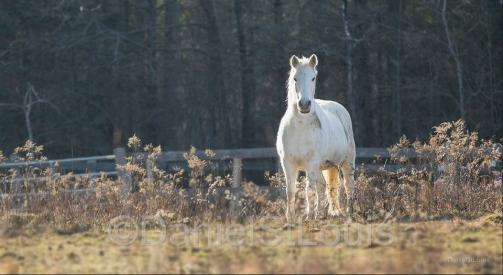 Horse in Dover-Foxcroft, Maine.