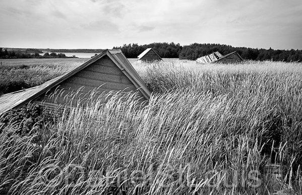 Fallen barns in field in Little Shemogue NB.