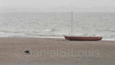 A bird on the beach in Shediac, NB.
