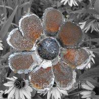 Steel art flower pedals.