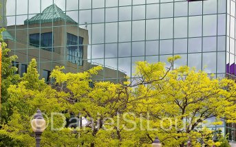 Spring time trees in front of Moncton City Hall.