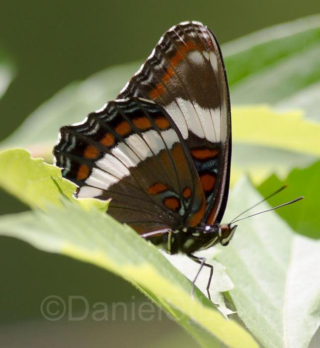 Close-up of butterfly on leaf.
