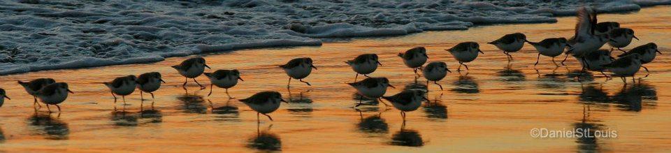 Birds on the shores of Belmont Shores, California.