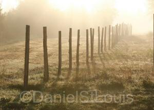 Foggy September morning fence.