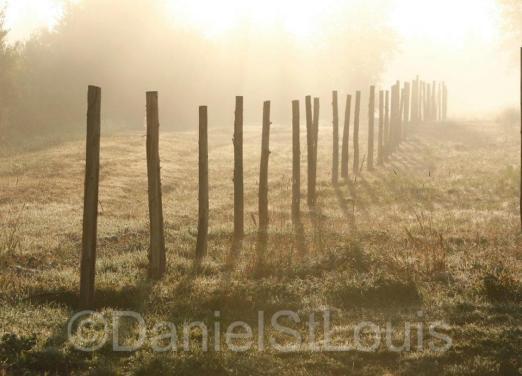 Foggy September morning fence.