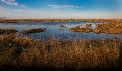 Fall marsh.
