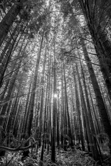 Black and white trees in Sombrio Beach, BC