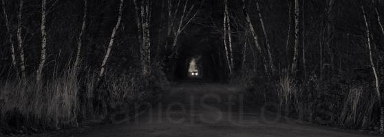 Car in the trees at night.