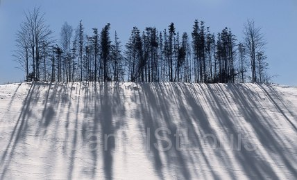 Long shadows of trees in the snow.