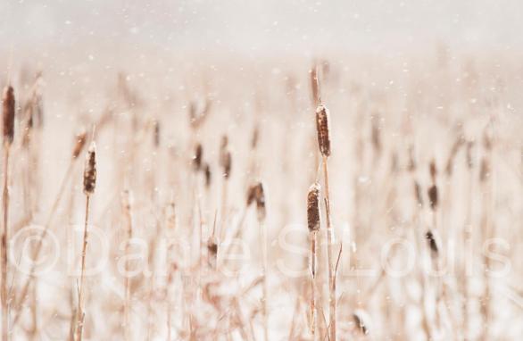 Winter on the marsh in Sackville, NB.
