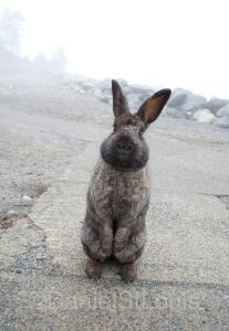 Rabbit at White Point Beach Resort.