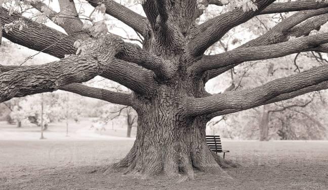 Black and white tree in ottawa, ontario.